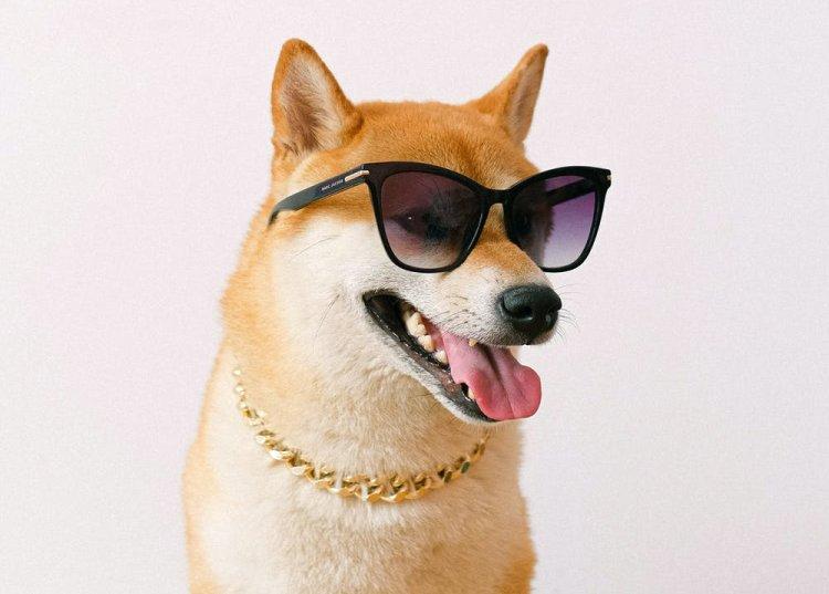 Dogecoin verbaast vriend en vijand